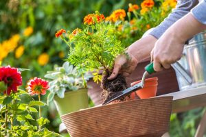 massage and gardening blog